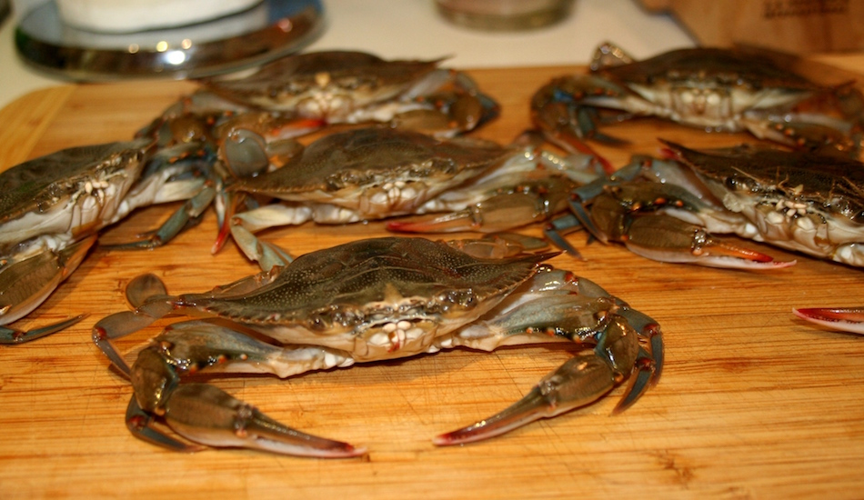 Maryland Soft Shell Crabs Catch 35 Seafood Restaurant